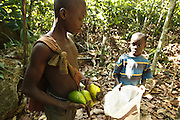 Firimin Kouassi, 13, (L) and his cousin Tanic Kouakou, 8, collect avocados on Tanic's father's cocoa plantation near the town of Moussadougou, Bas-Sassandra region, Cote d'Ivoire on Monday March 5, 2012.