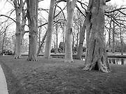 Scene from the Keukenhof Gardens - stark trees.