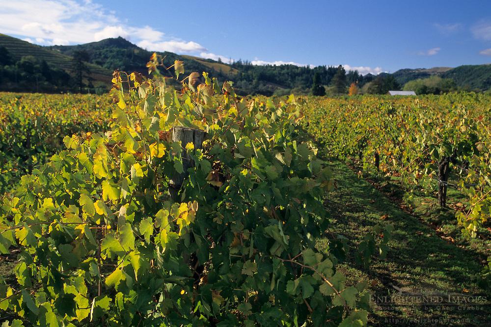 Grape vines at Preston Vineyards, along West Dry Creek Road, Sonoma County, California
