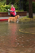 A woman walks her Golden Retriever as severe flooding continued for the second day in the historic district as Hurricane Joaquin brings heavy rain, flooding and strong winds as it passes offshore October 4, 2015 in Charleston, South Carolina.