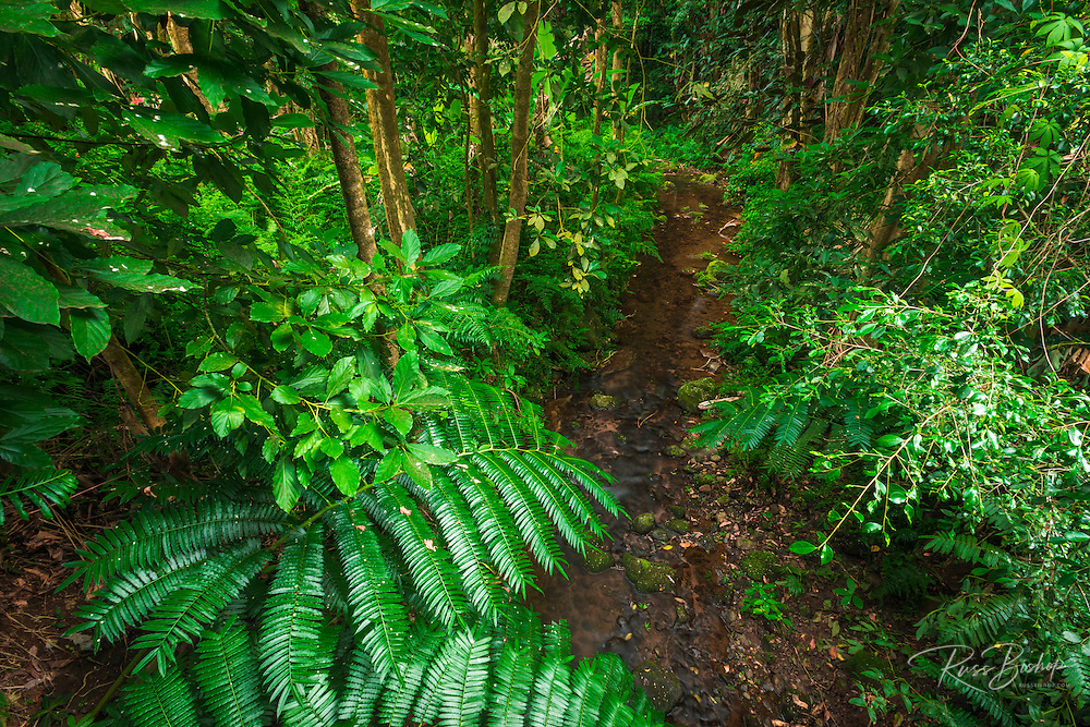 Jungle stream, Wailuku River State Park, Hilo, The Big Island, Hawaii USA