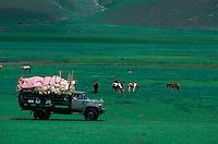 Mongolie, Province de l'Ovorkhangai, Campement nomade, Vie quotidienne chez les nomades, Transport des peaux de mouton // Mongolia, Ovorkhangai, transportation of sheep whool