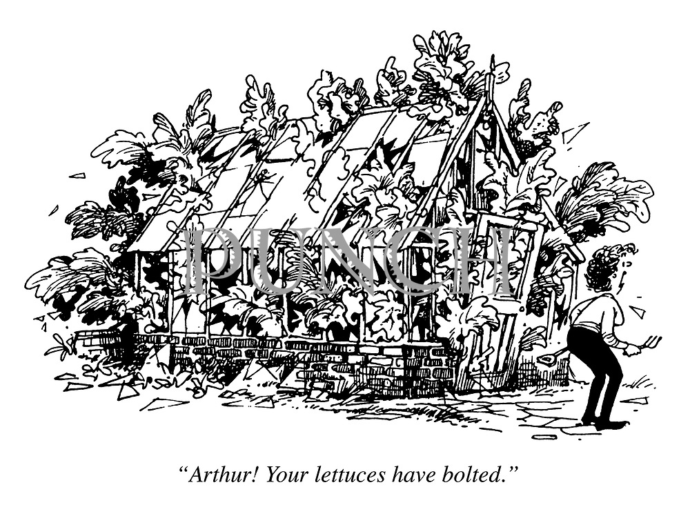 """""""Arthur! Your lettuces have bolted."""""""