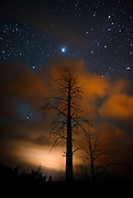 Stars in the night sky above the forests on the South Rim of Grand Canyon National Park.