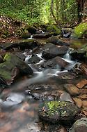 A rainforest creek that feeds the Potaro river.