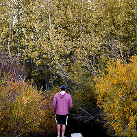 The Fall season in the Eastern Sierras is one of the most beautiful seasons to visit. Fishing the Mammoth Creek in the town of Mammoth Lakes.