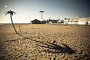 A palm tree on Coney Island beach, with the jump tower and the boardwalk in the background, Brooklyn, New York, 2010.