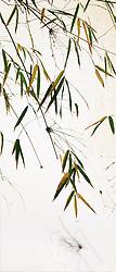 Bamboo vert #6