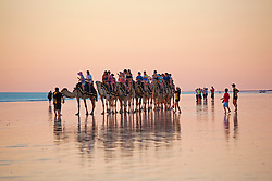 The Brown Camels head home on Broome's Cable Beach.  Low tide brings beautiful reflections in the wet sand.