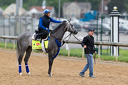 Derby 142 hopeful Mohaymen with Miguel Jaime up were on the track for training, Tuesday, May 03, 2016 at Churchill Downs in Louisville.