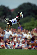 A 28.7 MG FILE FROM FILM OF:.a winner in the dog frisbie contest on the Mall in Washington DC. Photo by Dennis Brack