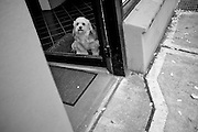 2011 October 26 - Dog in a doorway, Fremont, Seattle, WA, USA. Copyright Richard Walker