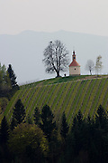 Demmerkogel. A chapel and oaktree starring on the label of Buschenschank Gerngross' wines.