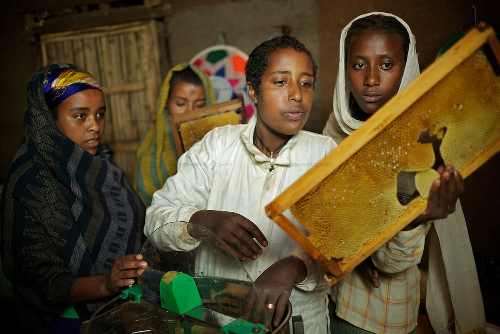 Wubalem (second right) and neighbours load racks taken from a modern hive into a centrifuge that will separate the honey from the wax. The racks, complete with wax, will then be replaced in the hive. <br /> <br /> Wubalem Shiferaw, age 23, lives in the village of Mecha with her husband Tsega Bekele, age 33, and their daughter Rekebki, age 4. Wubalem remembers her grandparents harvesting honey. She has maintained this tradition while moving to modern hives which produce a far greater yield of honey. Wubalem is a member of the Mecha village Cooperative which brings together local women beekeepers allowing them to share insights and build a credit union. The Mecha village Cooperative is not yet a member of the Zembaba Union. Wubalem's husband Tsega is a priest and a tailor. <br /> <br /> Harvesting honey supplements the income of small farmers in the Ethiopian region of Amhara where there is a long tradition of honey production. However, without the resources to properly invest in production and the continued use of of traditional, low-yielding hives, farmers have not been able to reap proper reward for their labour. <br /> <br /> The formation of the Zembaba Bee Products Development and Marketing Cooperative Union is an attempt to realize the potential of honey production in Amhara and ensure that the benefits reach small producers. <br /> <br /> By providing modern, high-yield hives, protective equipment and training to beekeepers, the Cooperative Union helps increase production and secure a steady supply of honey for which there is growing demand both in and beyond Ethiopia. The collective processing, marketing and distribution of Zembaba's &quot;Amar&quot; honey means that profits stay within the cooperative network of 3,500 beekeepers rather than being passed onto brokers and agents. The Union has signed an agreement with the multinational Ambrosia group to supply honey to the export market. <br /> <br /> Zembaba Bee Products Development and Marketing Cooperative 
