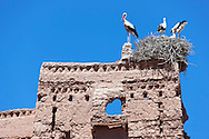 Storks on top of the Stork Kasbah in Ouarzazate (Kasbah des Cigognes) against clear blue sky.