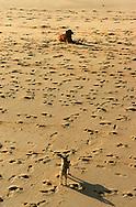 PRT, Portugal: Streunender Hund, Haushund (Canis lupus familiaris), ein Hund ruht sich am Strand auf, ein anderer entfernter Hund versucht seine Aufmerksamkeit zu erringen, Strand übersät mit menschlichen Fußabdrücken, Armacao de Pera, Algarve | PRT, Portugal: Stray dog, domestic dog (Canis lupus familiaris), one dog resting on the beach, another one in a distance trying to get its attention, beach covered with human footprints, Armacao de Pera, Algarve |
