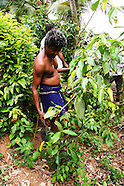 Spices & Sri Lanka