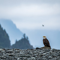 31 - Kenai Fjords National Park