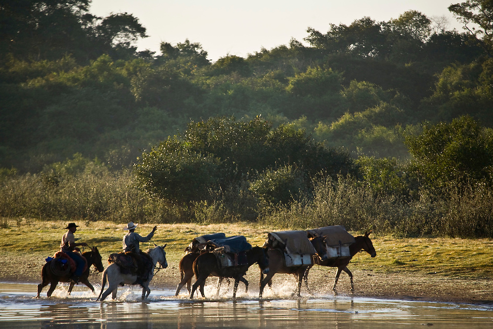 Aquidauana_MS, Brasil...Homens tocando cavalos na Fazenda Rio Negro no Pantanal...The cowboy herding donkeys in the Rio Negro farm in Pantanal...Foto: JOAO MARCOS ROSA / NITRO