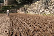 France, Languedoc Roussillon, Cévennes, Gard, culture d'oignons doux des Cévennes, Notre Dame de la Rouvière, semis au semoir, Jerôme Fesquet