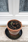 pot with plant starting to sprout