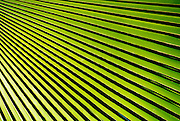 "Abstract patterns of shadow and light on bright green tropical palm fronds and leaves. - To license this image, click on the shopping cart below - -- Determine pricing and license this image, simply by clicking ""Add To Cart"" below --"
