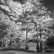 Caddo Lake Spadock Launch - Caddo Lake, Texas - Infrared Black & White