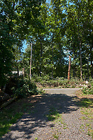 Tropical Storm Isaias Aftermath. Little Planet View of my Front Yard after the Tree Crews Cleared the Downed Oak Trees. Image 14 of 27 used for the Little Planet composite taken with a Leica CL camera and 18 mm f/2.8 lens