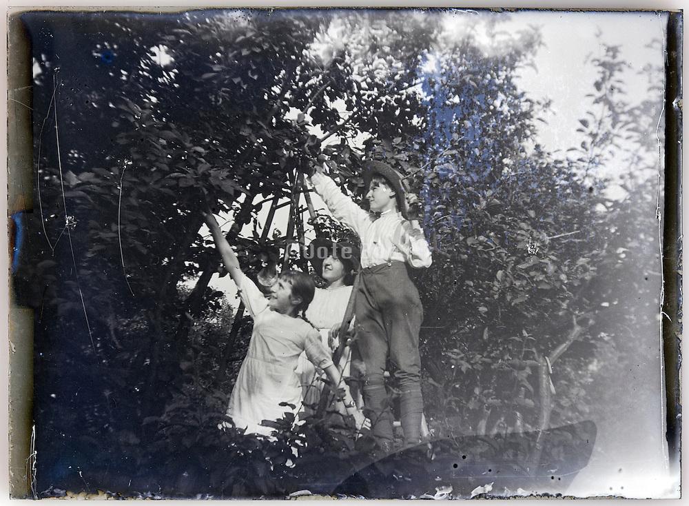 children picking fruit 1900s glass plate