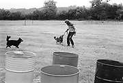 Hank playing with the dogs outdoors at Glastonbury, 1989.