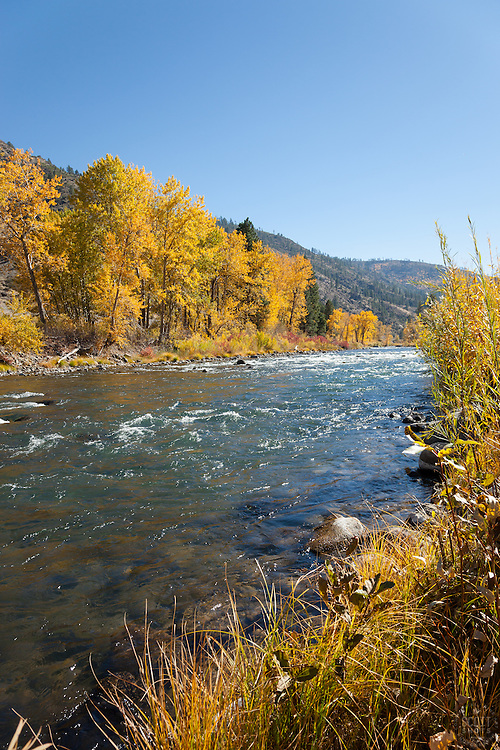 """Truckee River in Autumn 9"" - Photograph of yellow leaved cottonwood trees, taken along the shore of the Truckee River in Autumn."