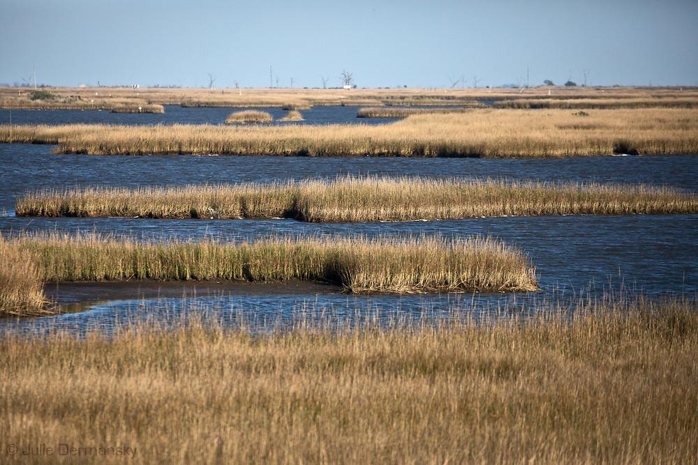 Eroding marshland off Isle de Jean Charles, Louisana.
