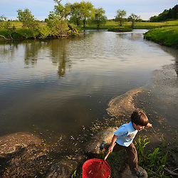 A boy (age 6) searches for frogs in a pond on a farm in Ipswich, Massachusetts.