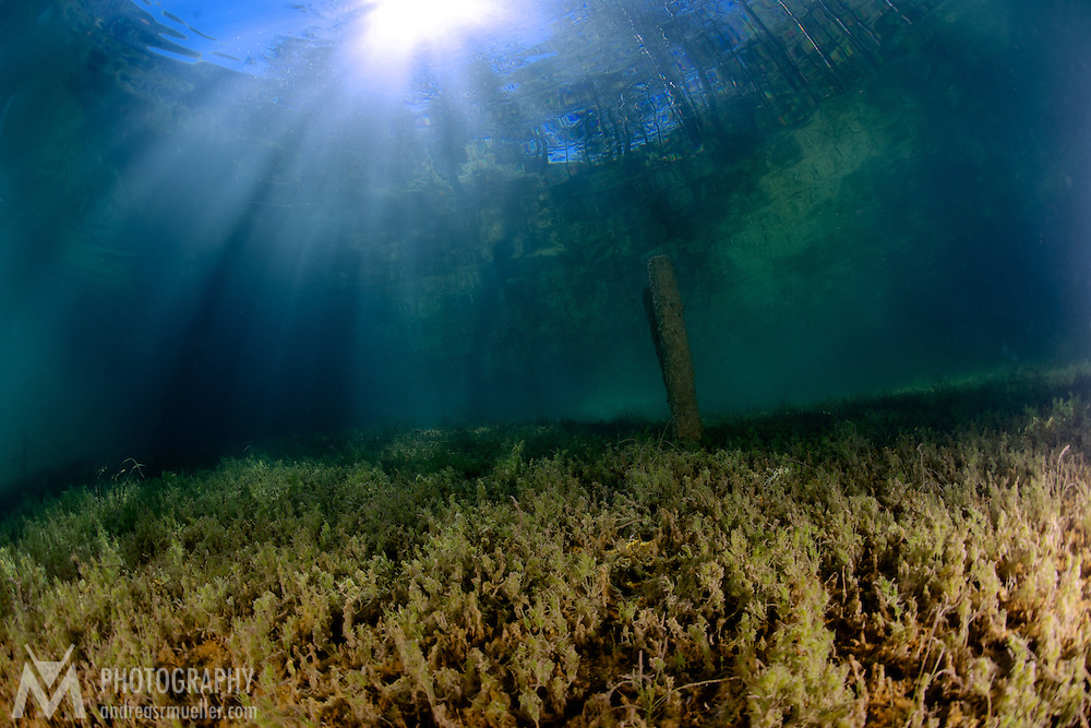 Dive Spot: Fernsteinsee Underwater landscape at Fernsteinsee, Austria. Interesting cold water natural cover. Crystal clear water and spectacular illumination.