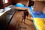 The norwegian hiking association in Mid-Norway, Trondhjems Turistforening, have dogrooms in all therir cabins in the mountains. Hunderommet på Schulzhytta i Sylan har fire plasser for hunder, hundebur, og seks senger.