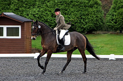 Affiliated dressage at Sheepgate Equestrian Centre..1-11-2009.Horse 285