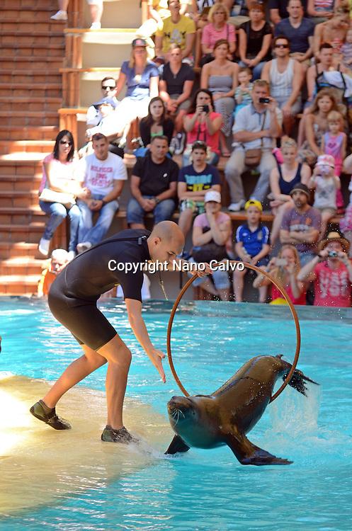 Sea lions show in Loro Parque, theme park in Puerto de la Cruz, Tenerife