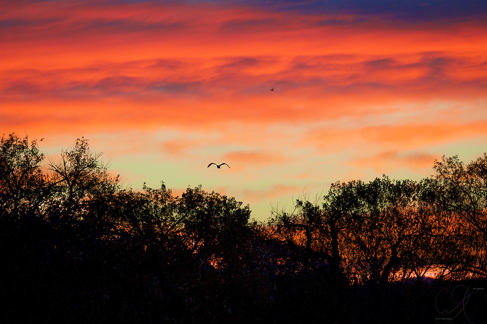 The immensely colorful New Mexican sunrise down on the Bosque del Apache bird wildlife refuge.
