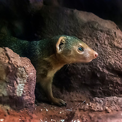 Pequeno mamífero (animal) Registro feito em 2009.<br />  Animal em Cativeiro.⠀<br /> ENGLISH: Small mammal  Picture made in 2009. Captive animal.
