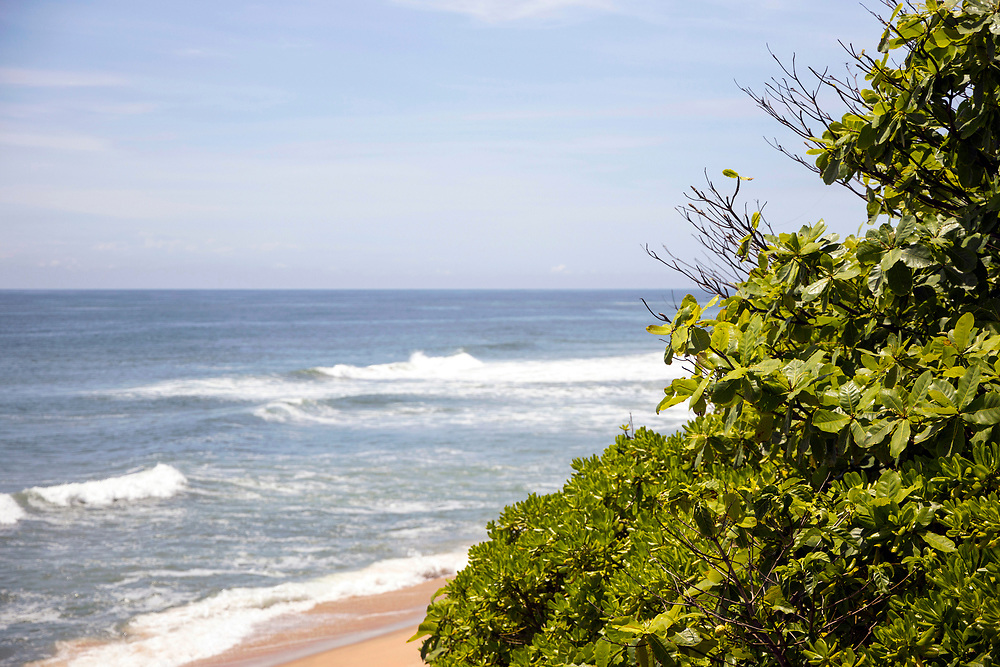 VARKALA, INDIA - 27th September 2019 - Varkala Cliff Beach flora, Kerala, Southern India