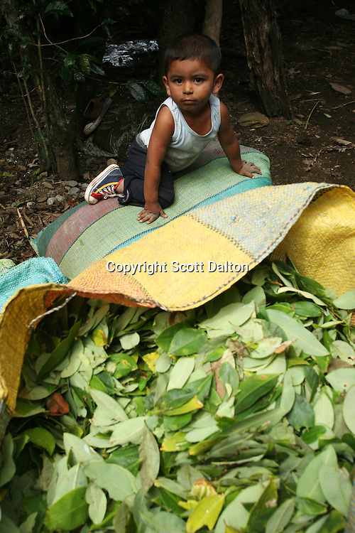 A young boy climbs on top of a bag of coca leaves at a coca lab in a remote area of the southern Colombian state of Nariño, on Monday, June 25, 2007. Although government efforts to eradicate coca have reached many parts of Colombia, still the coca business thrives. (Photo/Scott Dalton)