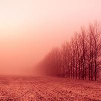 Trees in fog at Eye runway in Suffolk England