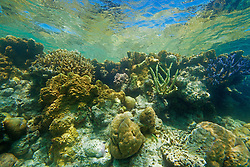 """Colourful corals in """"The Aquarium"""" in Clerke Lagoon, at the Rowley Shoals."""
