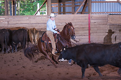 September 23, 2017 - Minshall Farm Cutting 5, held at Minshall Farms, Hillsburgh Ontario. The event was put on by the Ontario Cutting Horse Association. Riding in the $250 Novice Rider Class is Lynne Purdie on Timothy Taz owned by the rider.