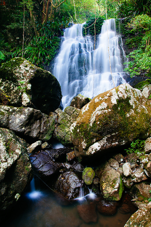 Selva Falls in the pristine subtropical rainforest of Border Ranges National Park.