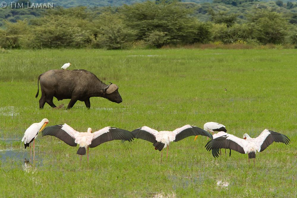 Lake Manyara National Park<br /> Tanzania, Africa