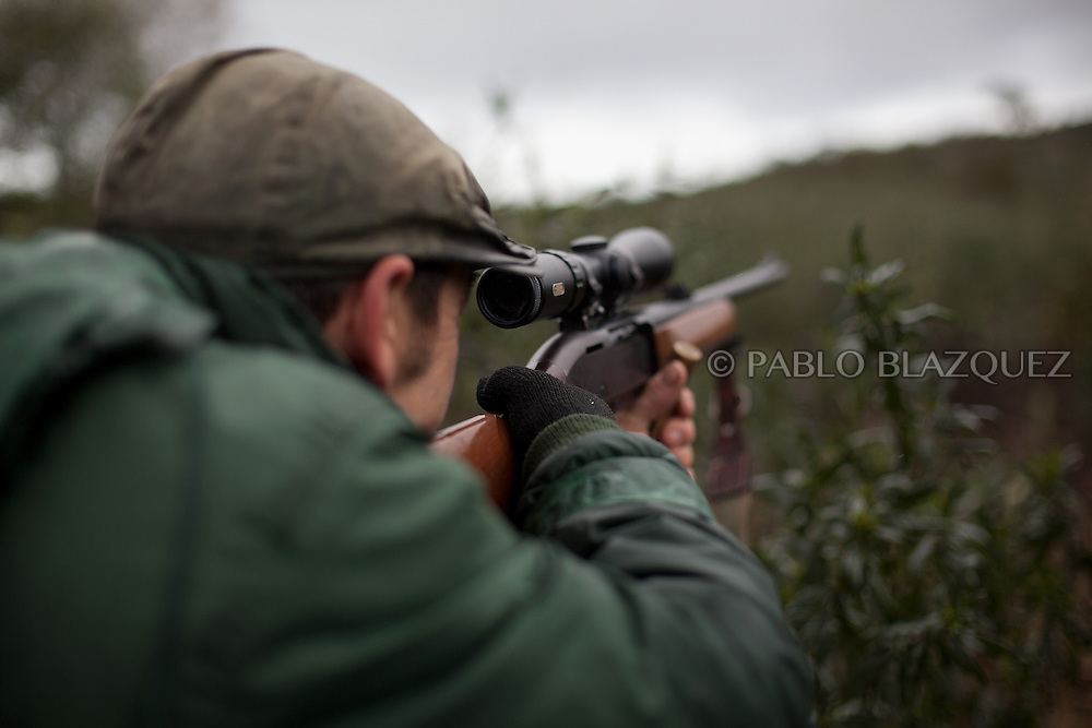 Pedro Bravo 48, aims his riffle at a deer near Carbajo on January 19 2013, in Caceres Province, Extremadura, Spain. .Caceres has a well preserved natural environment. Plenty of its surface is dedicated to deers and wild boars hunting, making this, an important part of its economy. But most of the land belongs to large landowners. .In Carbajo, people gather three times a year to hunt deers and wild boars. In the past, they used to hunt for eating, but now days, they practice it as an sport and a social event. Then, they sell what the catch as wild game meat.