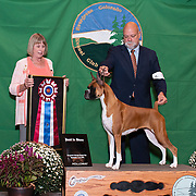 Evergreen Kennel Club 09/08/2019