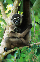 Squirrel Monkey embracing young in tree