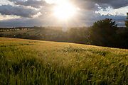 The sun sinks over barley fields and the valley outside Hartest,  valley on 10th July 2020, in Hartest, Suffolk, England.